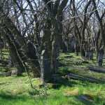 Cemetery free wallpapers