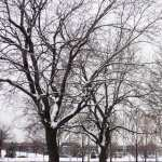 Tree widescreen