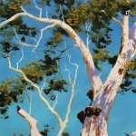 Tree Artistic background