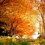 Fall Photography wallpaper
