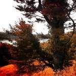 Tree high definition photo
