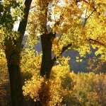 Fall Photography background