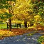 Fall Photography wallpapers for iphone