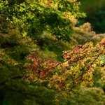 Branch hd photos
