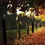 Fall Photography photos