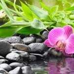 Zen high definition photo