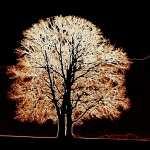 Tree Artistic free download