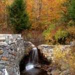 Fall Photography free