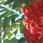 Fruit free wallpapers