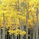 Fall Photography desktop wallpaper