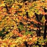 Fall Photography widescreen