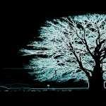 Tree Artistic hd wallpaper