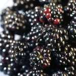 Blackberry Food high definition wallpapers