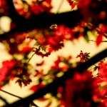 Branch pic