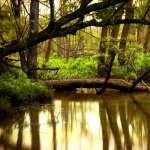 Tree hd desktop