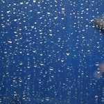 Raindrops Photography hd wallpaper