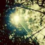 Sunbeam hd pics