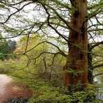 Tree hd photos