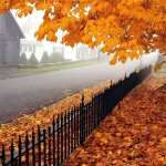 Fall Photography PC wallpapers