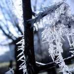 Winter Photography photo