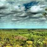 Daintree Rainforest high definition photo