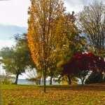 Fall Photography hd photos