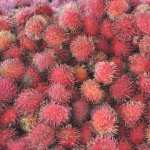 Lychee wallpapers