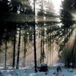 Sunbeam photo
