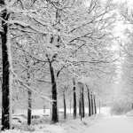 Winter Photography pics