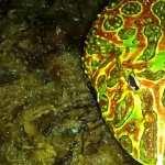 Pac-man Frog free download
