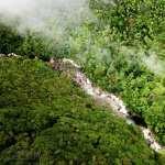 Daintree Rainforest desktop
