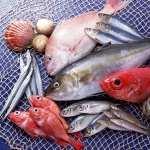 Fish Food background