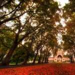 Fall Photography free download