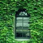 Window pics