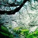 Tree Artistic new photos
