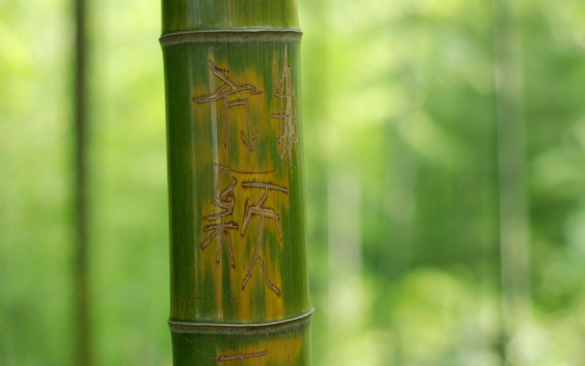 Bamboo wallpapers HD quality