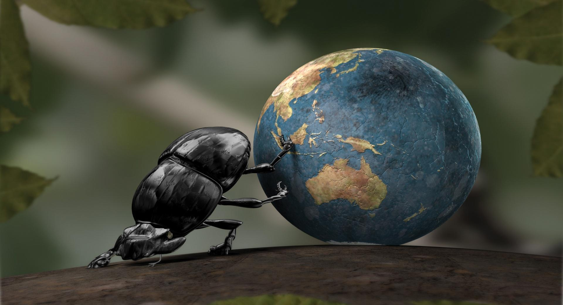 Beetle Illustration wallpapers HD quality