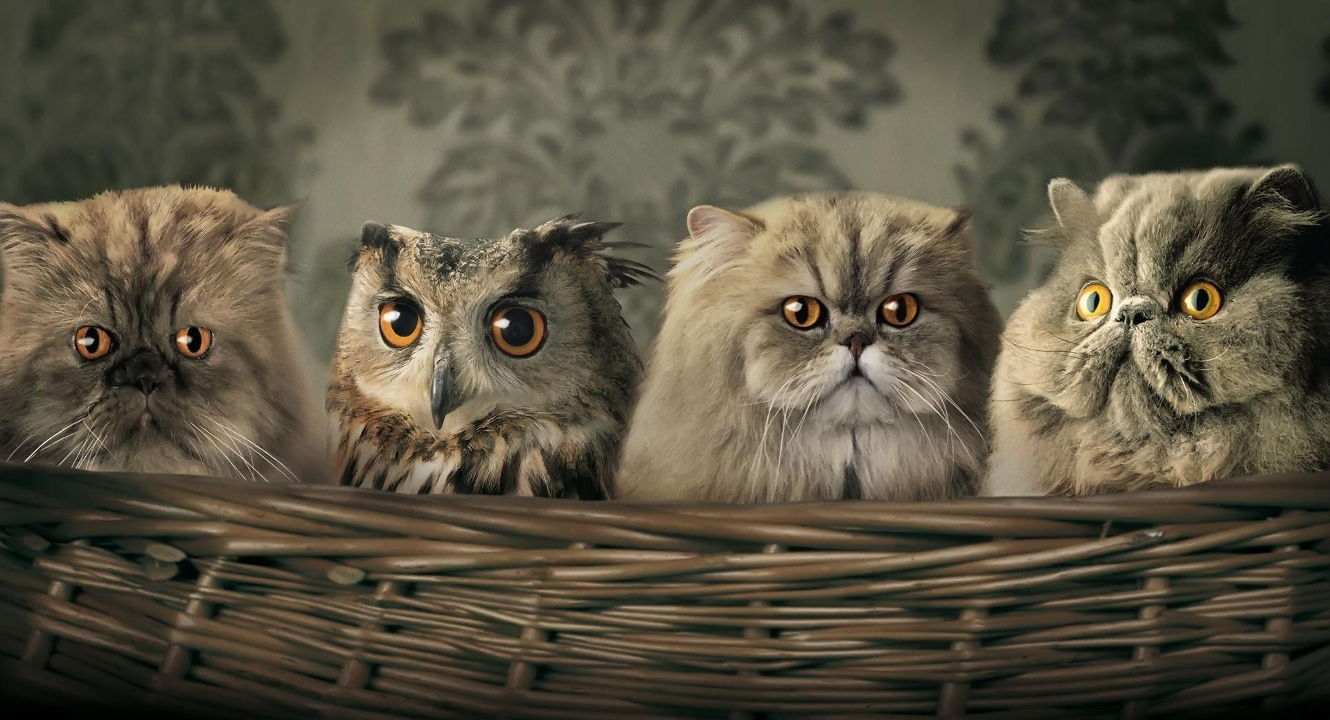 Cats And Owl wallpapers HD quality