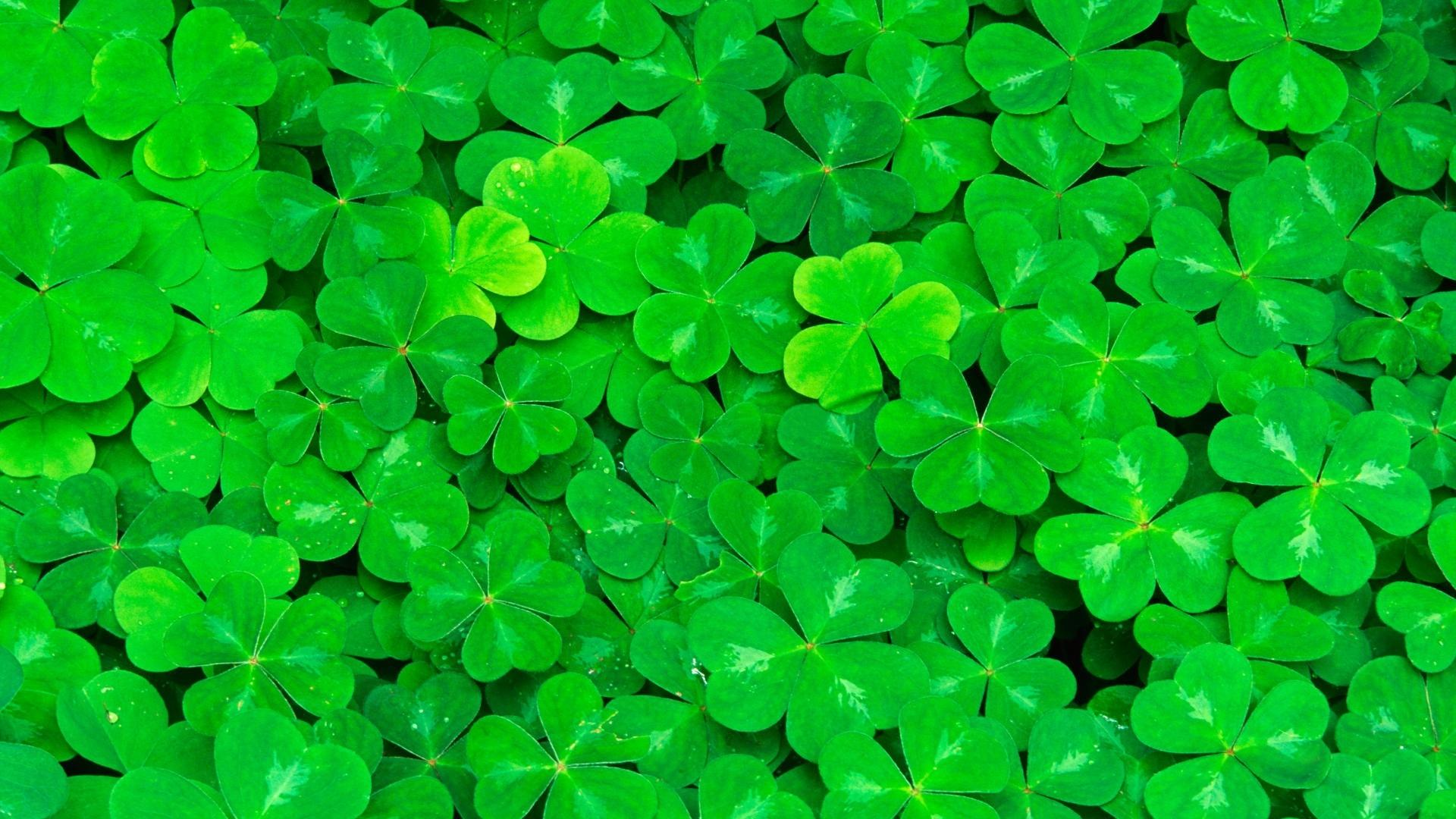 Clover wallpapers HD quality