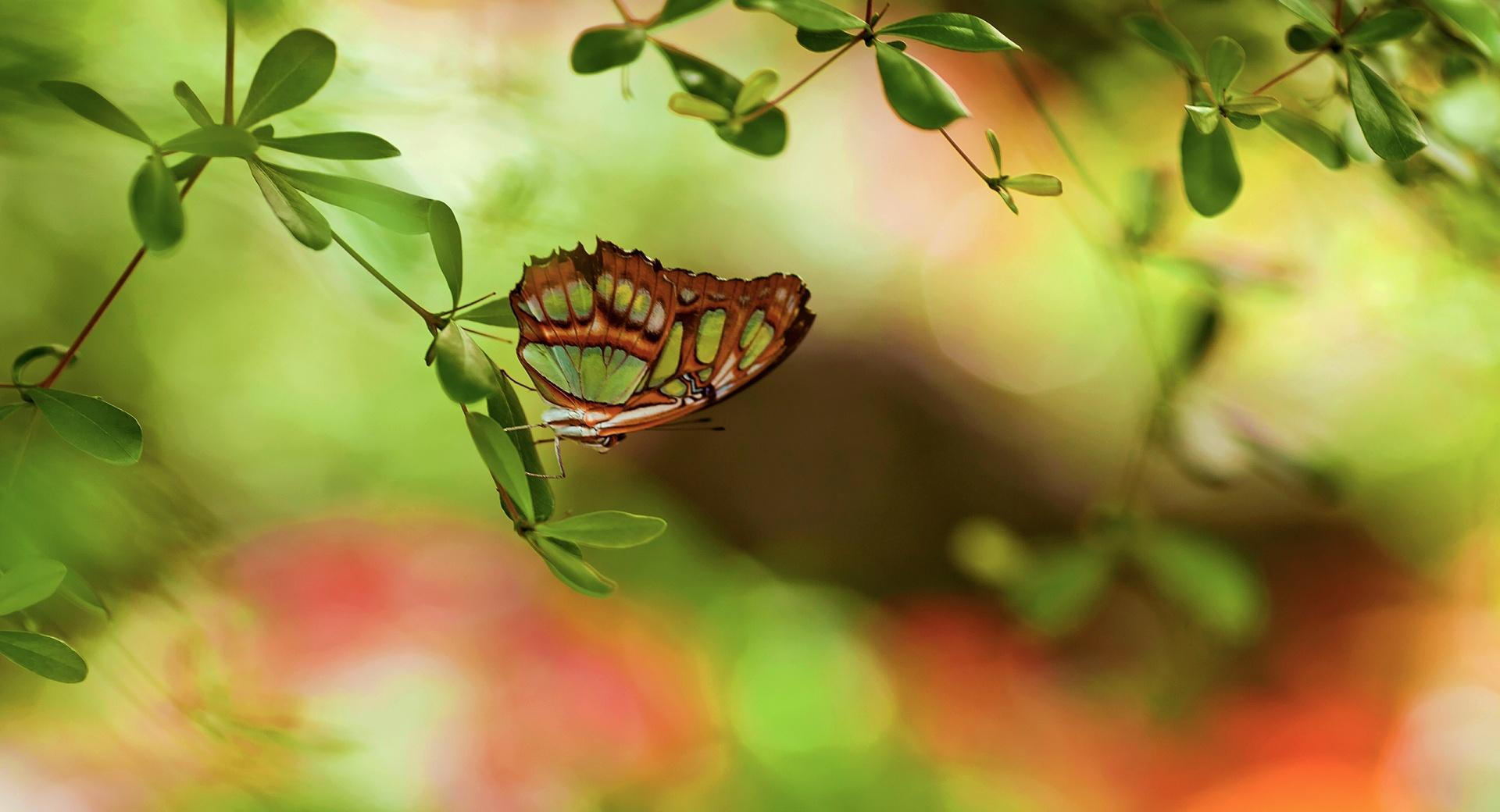 Colorful Butterfly wallpapers HD quality