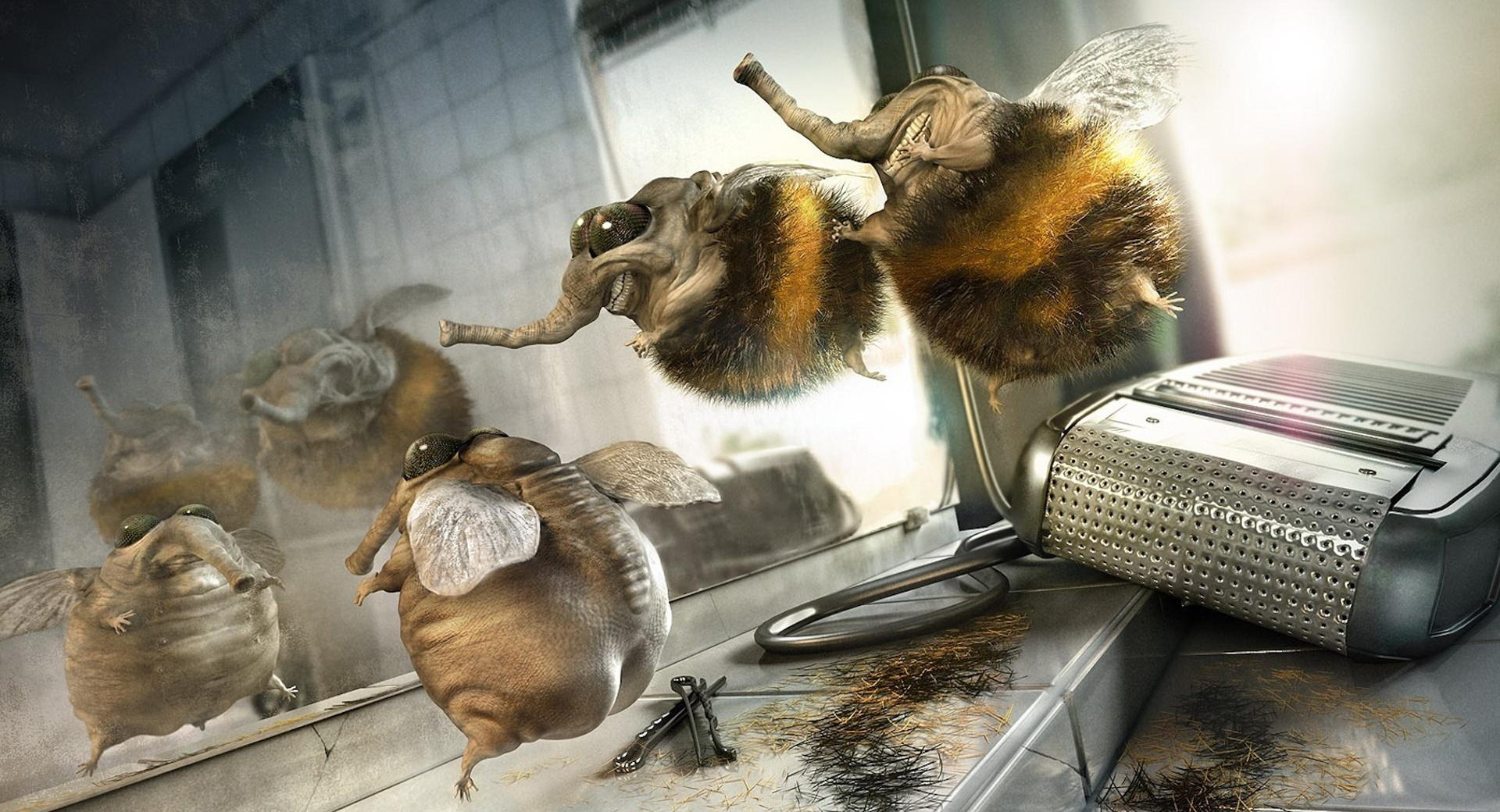 Funny Flies wallpapers HD quality