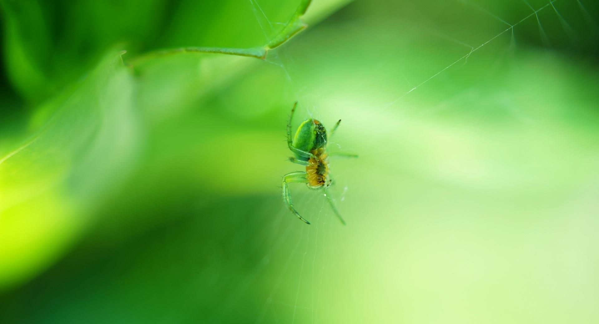 Green Spider wallpapers HD quality