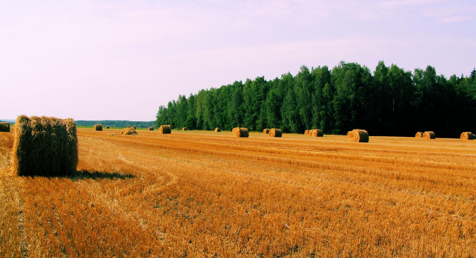 Haystack On Field wallpapers HD quality