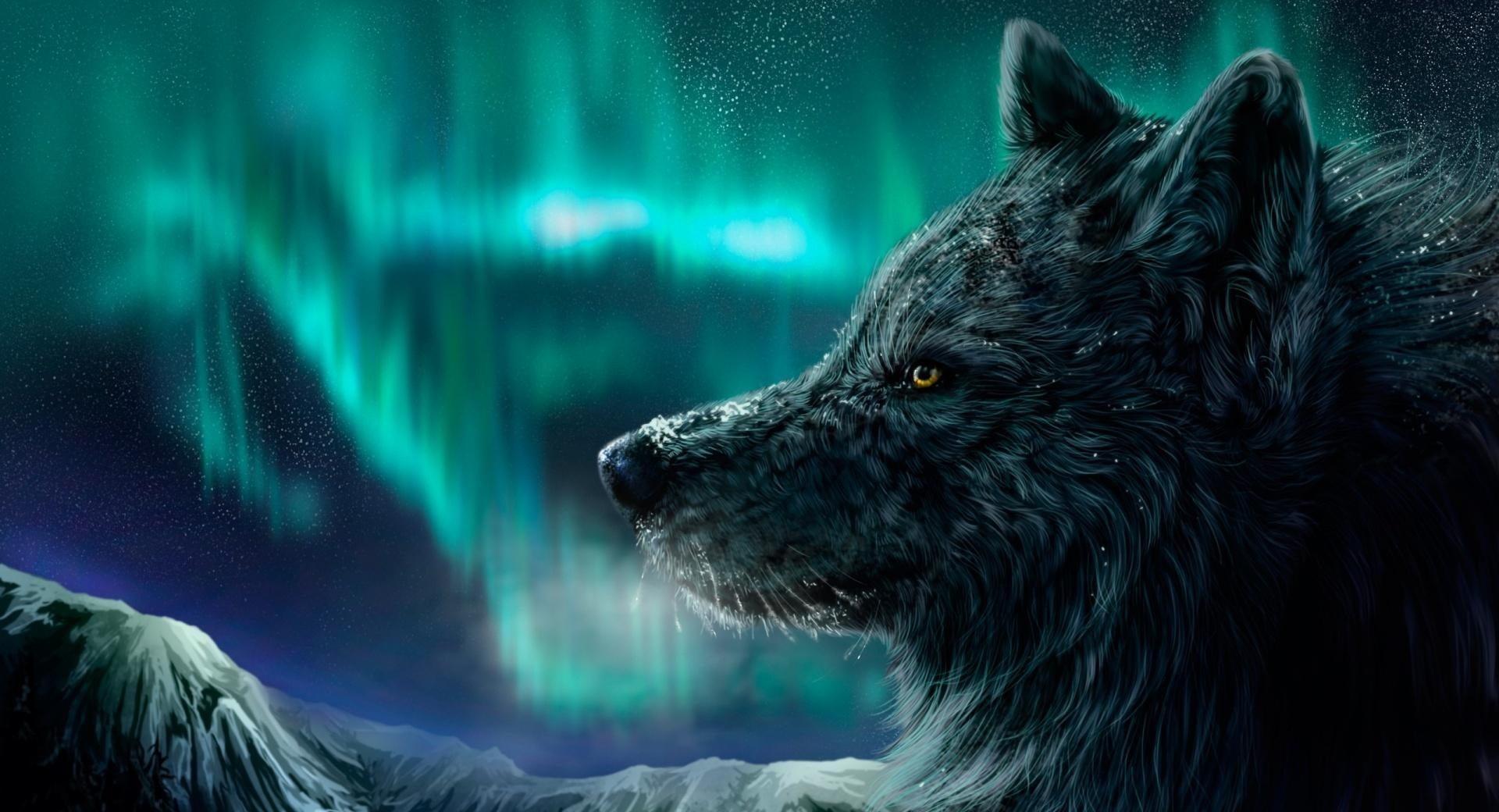 Mountain Wolf at 1334 x 750 iPhone 7 size wallpapers HD quality