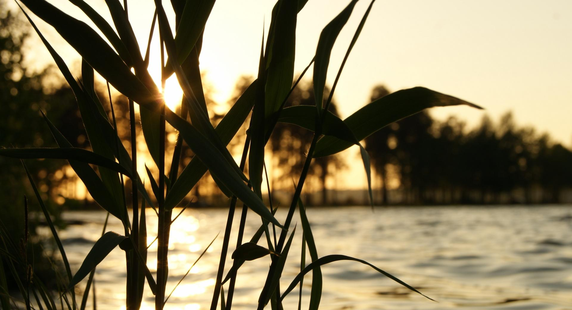 Reed, Sunset wallpapers HD quality