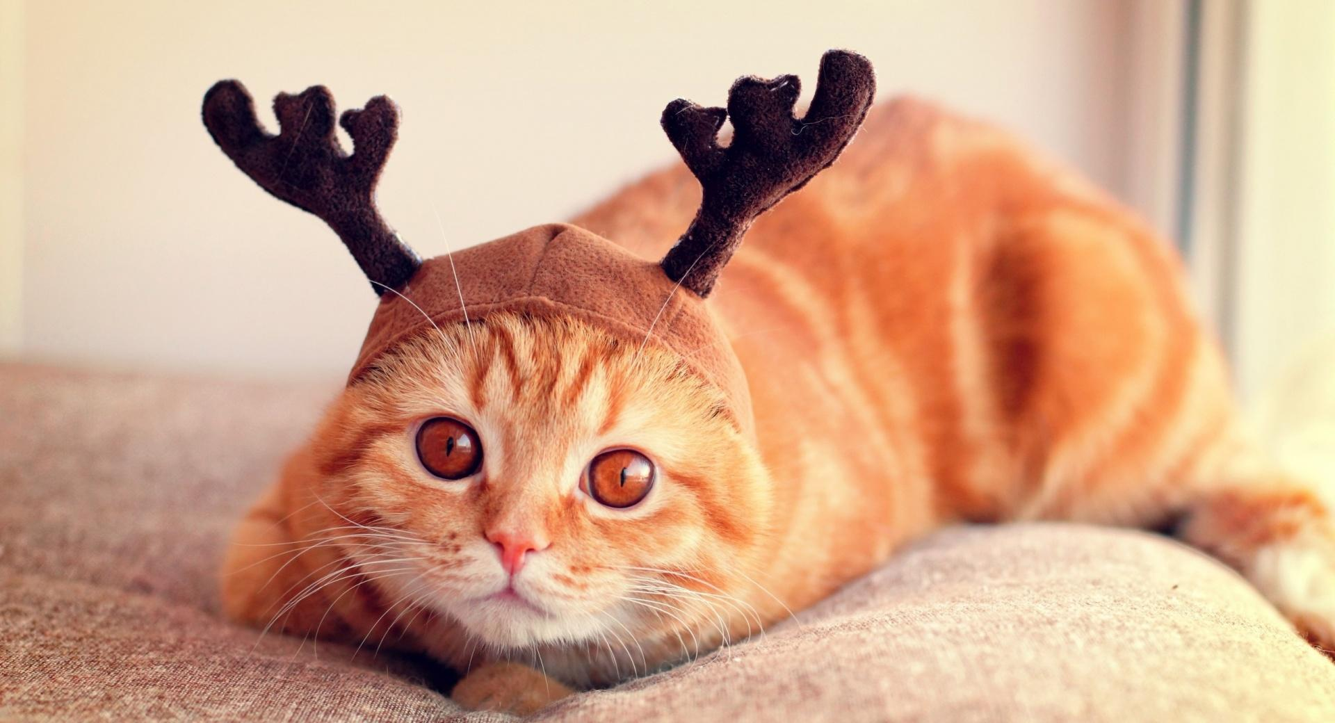 Reindeer Cat wallpapers HD quality