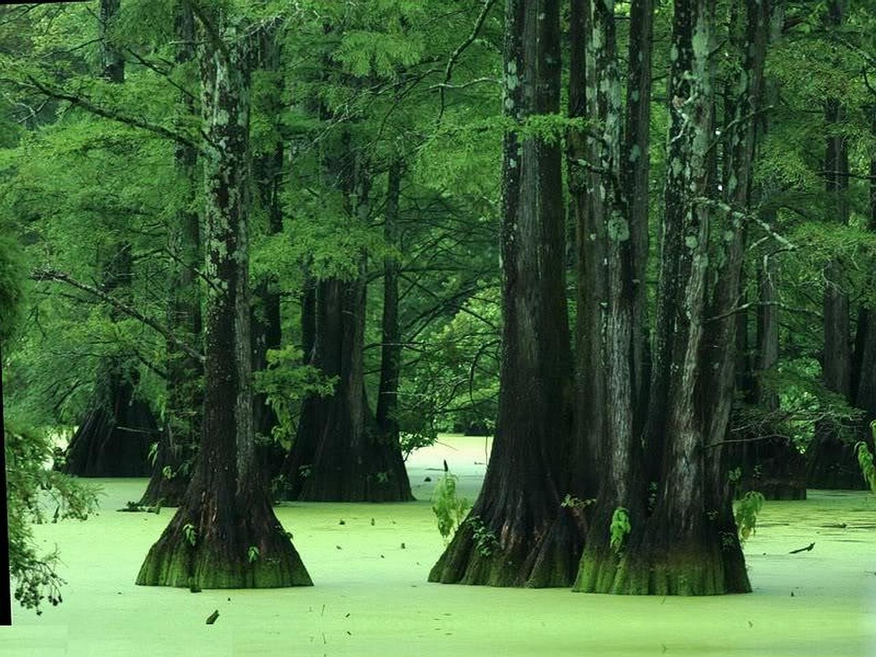 Swamp wallpapers HD quality