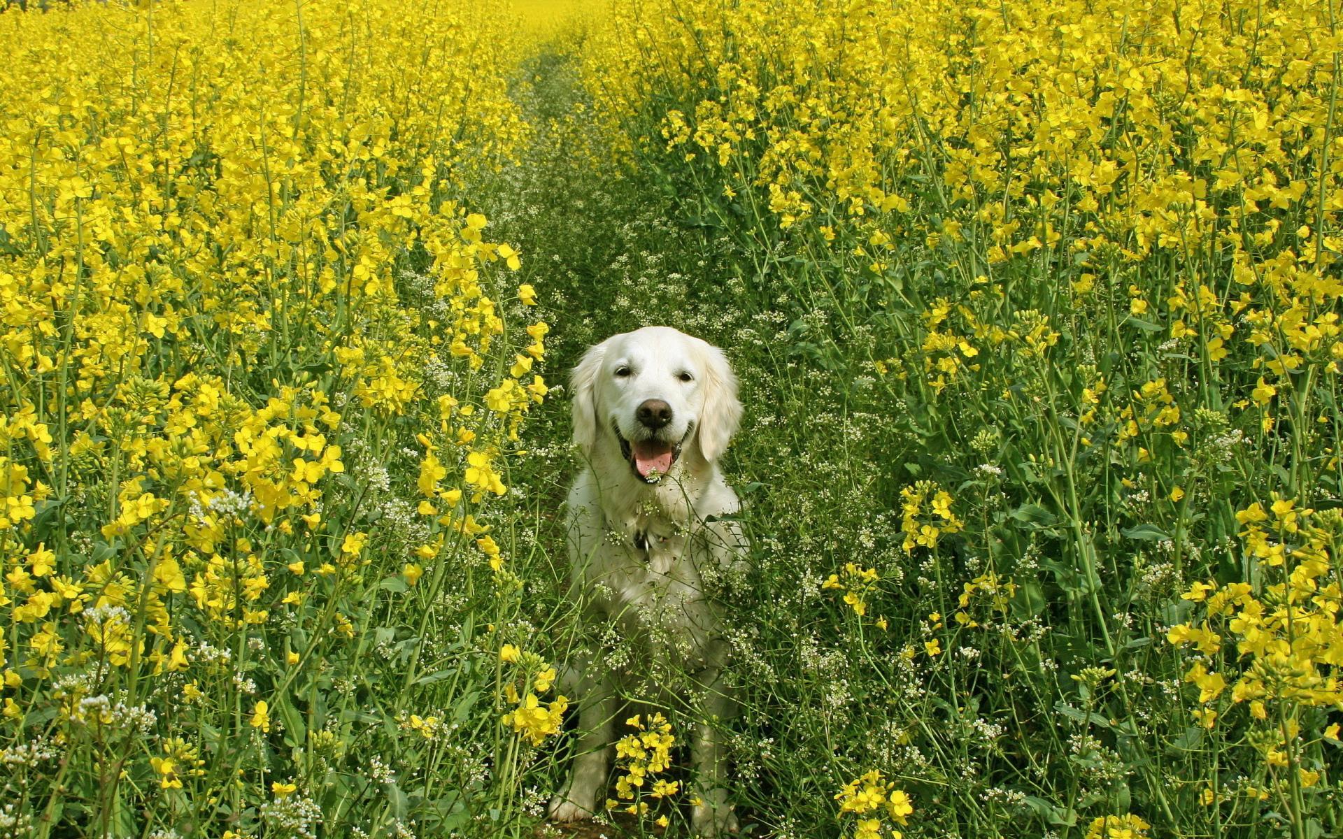собака трава бесплатно