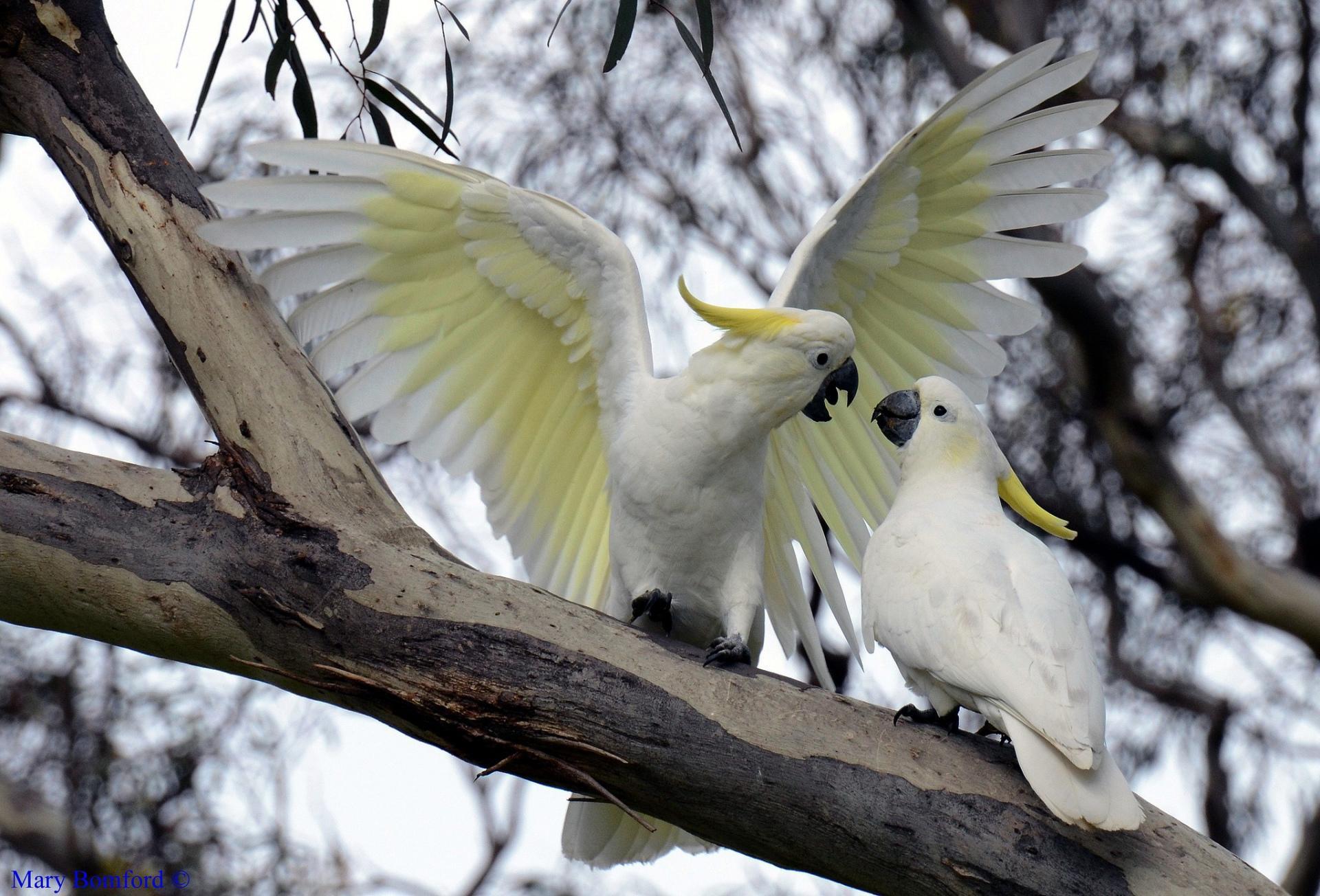 Попугай ствол ветка бесплатно
