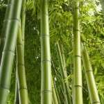 Bamboo download
